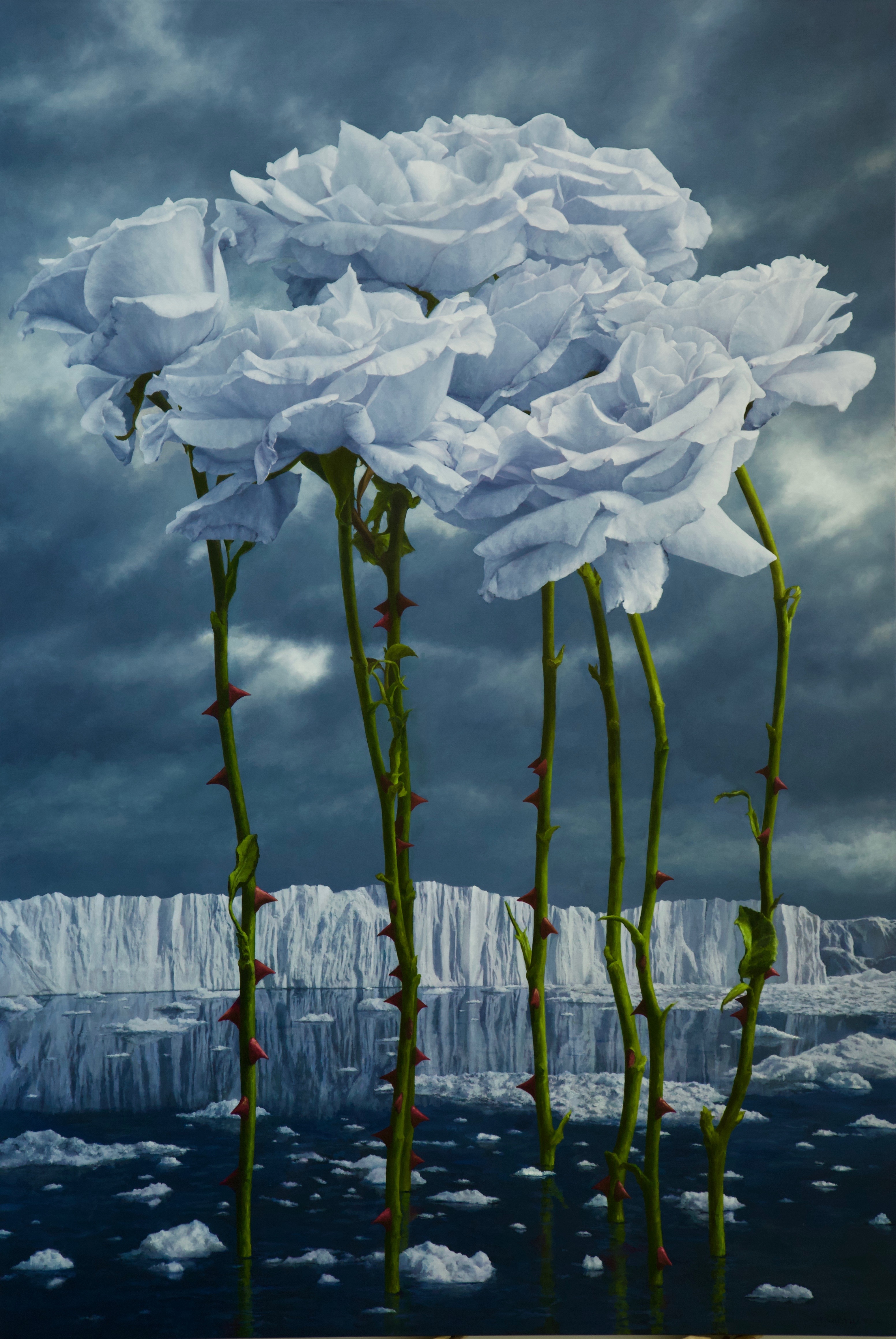 7 icy white blue roses black sea glaciers
